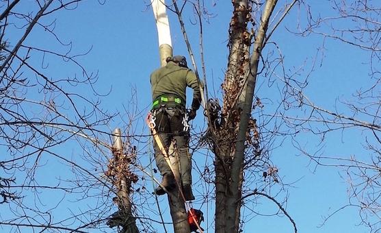 bomen kappen utrecht boomklus